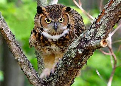 birds of prey 1