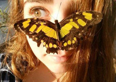 francesca-butterfly
